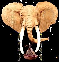 Elefanteconocheturapng