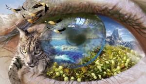 ojo_naturaleza-300x173